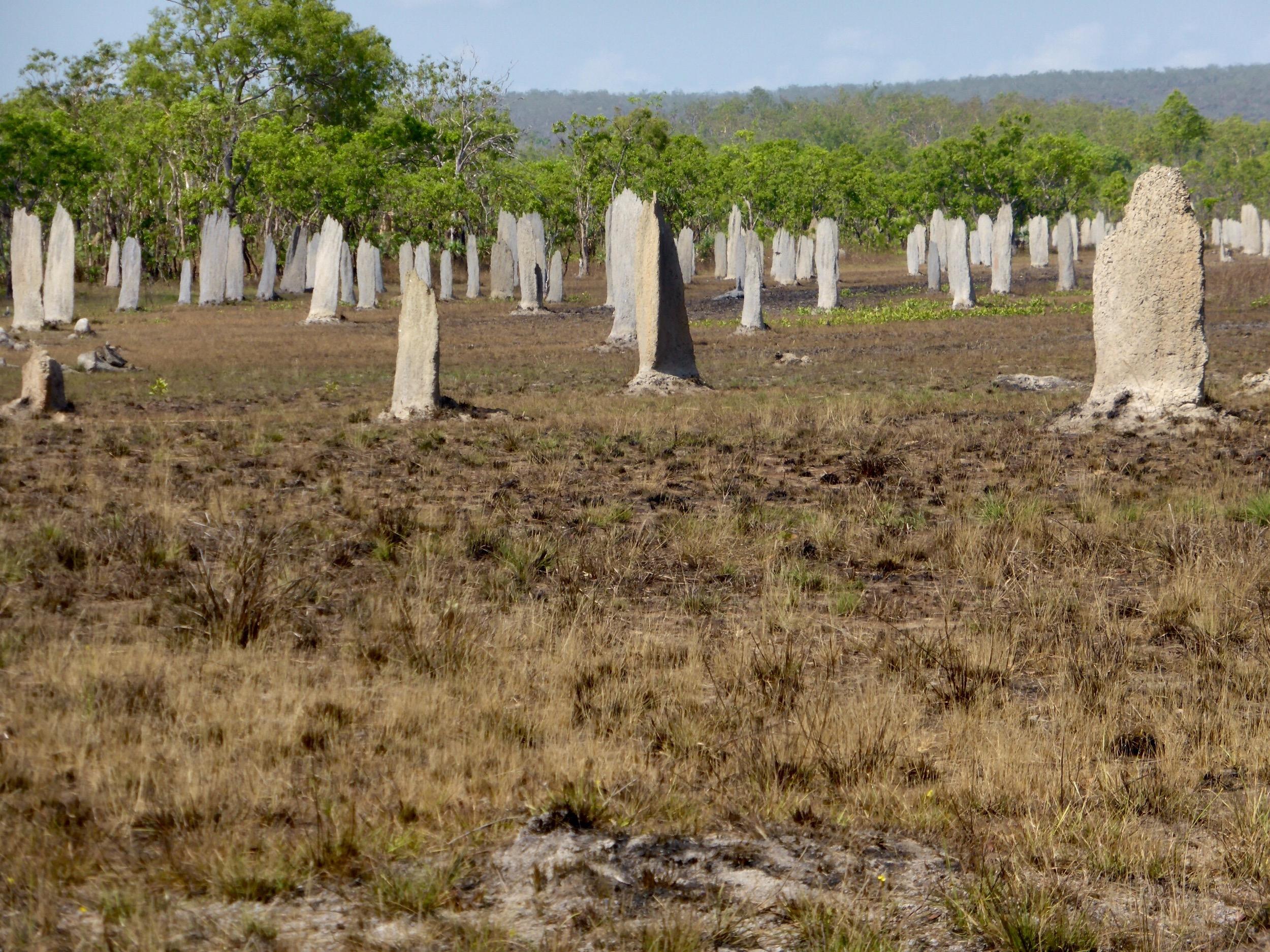 Viewing platform of termite mounds at Litchfield National Park