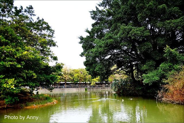 麗池櫻花61