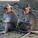 monkey forest ubud 22feb2017 18