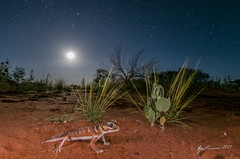 Wildlife astrophotography