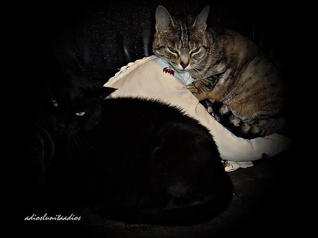 Luky y Dolsa hora de dormir 001