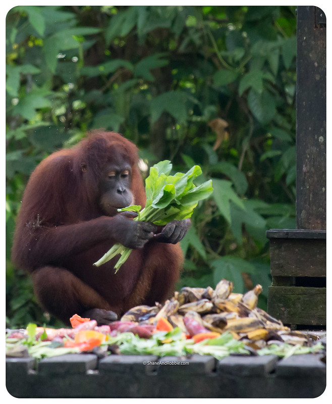 Borneo-20170413-_MG_8222