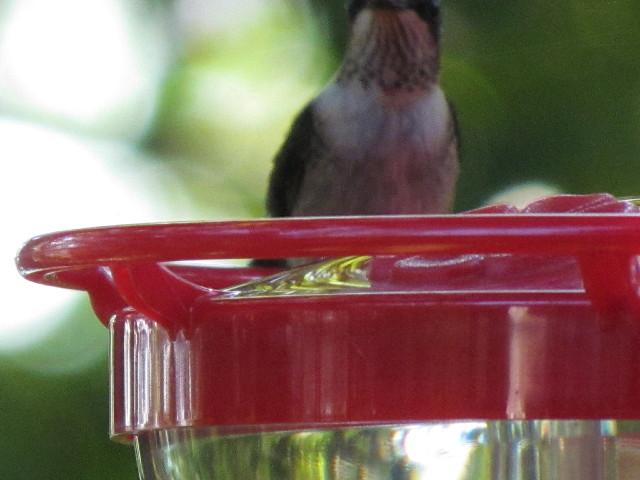 Hummingbird2 9:27:14