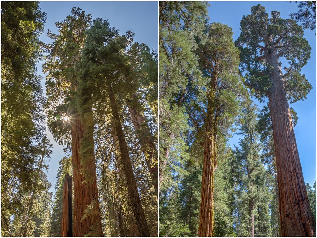 Hotels Around Sequoia National Park