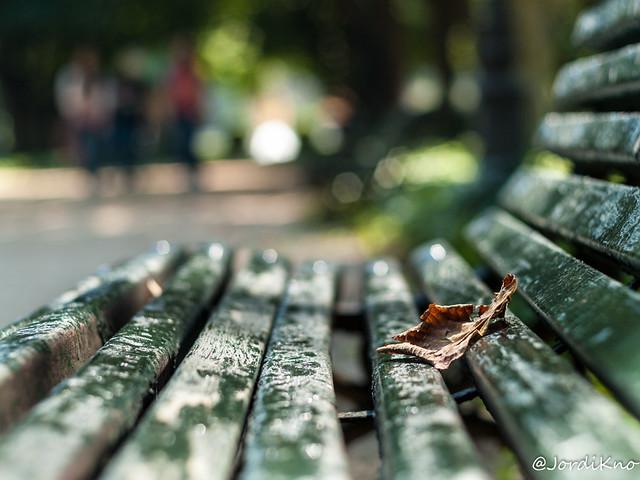 Jugando con el desenfoque. Parc de Cervantes, Barcelona