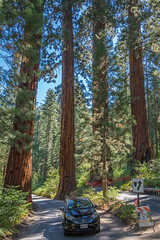 Car w/ Sequoias