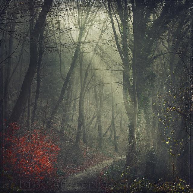 Dyrk.Wyst - light.hike