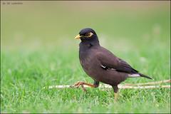 2012-04-20_Birds_302_web
