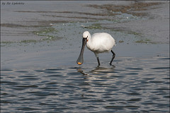 2012-10-27_Birds_447_web