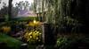 Garden Oakville