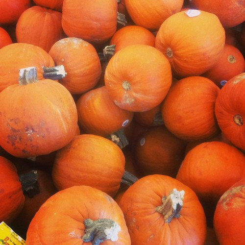Got a #pumpkin to make some pumpkin butter this weekend. What would you make with pumpkin? #fitfluential