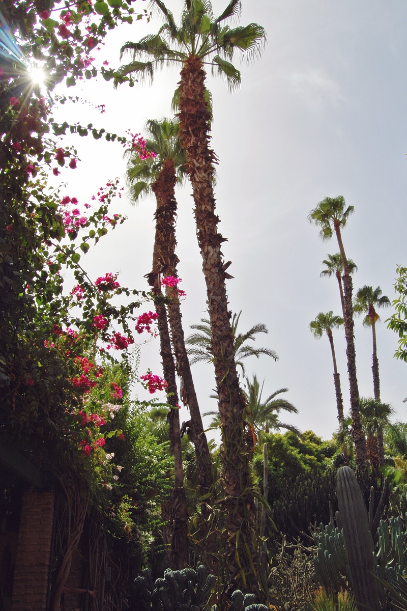 Jardin Majorelle (16)