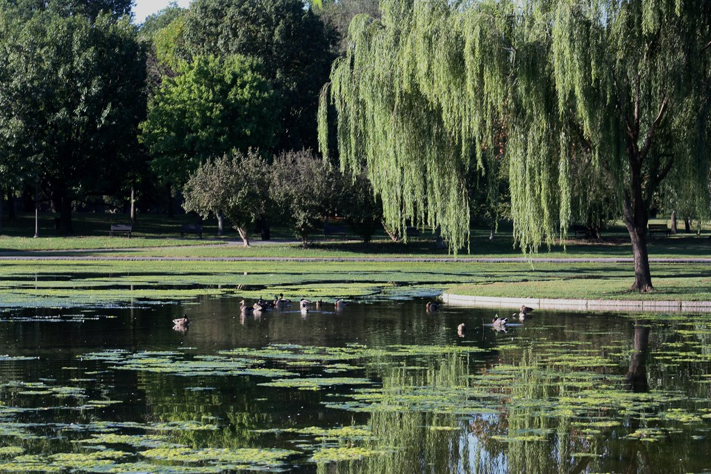 Constitutional Garden