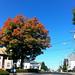 tree by scleroplex