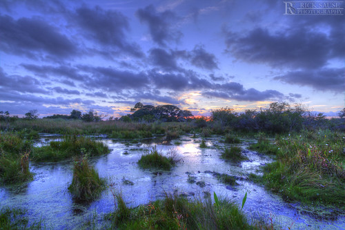blue trees sunset sky orange cloud sun tree nature wet water grass yellow set clouds reeds landscape photography nc high still skies dynamic mud north rick bank dirty swamp sound land carolina marsh outer scape range hdr banks obx wetland sause ricksausephotography