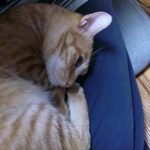 膝でアンモニャイトになる気か。重いから勘弁して by Chinobu