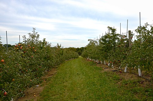 Triple B Farms - Apple Orchard
