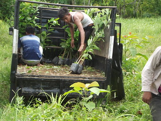 Seedlings transported to the planting location