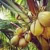 Hmmm more #PalmTrees ... relaxing at Rapture #SurfCamp #Bali