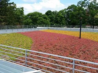 Storrs Hall green roof