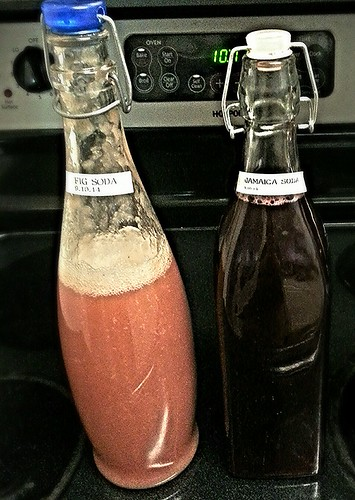 fig soda and jamaica soda (ginger bug ferment)