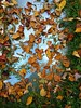leaves on glass