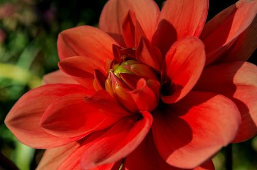 flower macro nature garden bokeh tripod f8 crossestate topazdenoise nikoutputsharpener sigma1770os