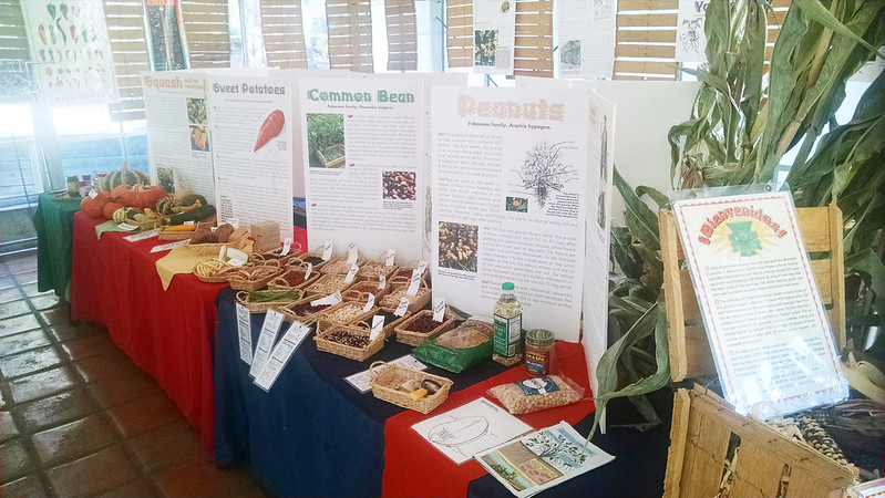 American food crop display at the UC Botanical Garden.