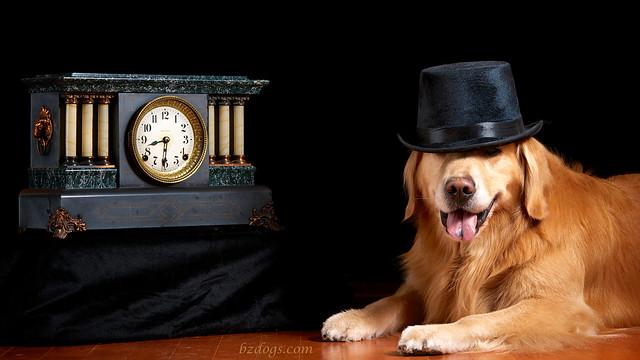 Classy Canine