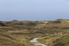 Texel dunes