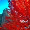 Even the trees are Big and Red at Cornell. #earlycollegevisit.