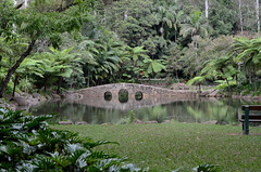 Botanic Gardens pond