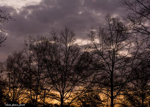 nature trees clouds sunrise dawn nikon