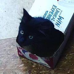 Kitty in a box!