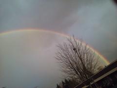 Rainbows an Cheery Trees 026