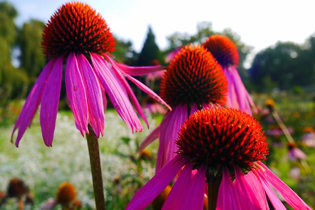 September Still in Bloom