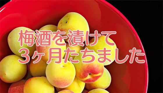 Japanese_apricot_20140928