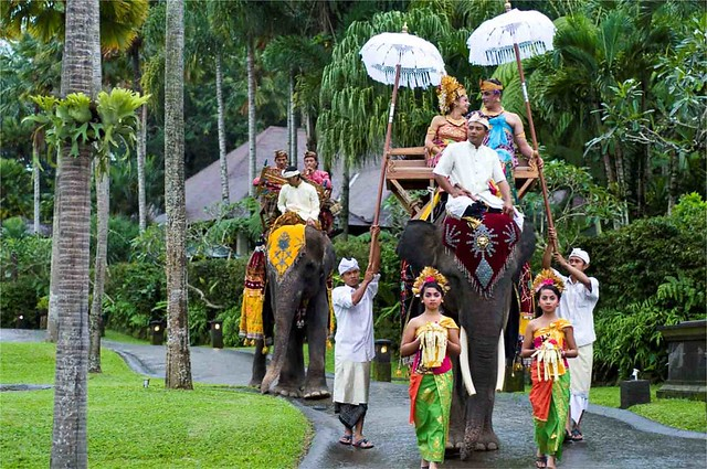 elephant1-viabaliweddingservices