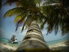 Belize-laughingbird-caye-1
