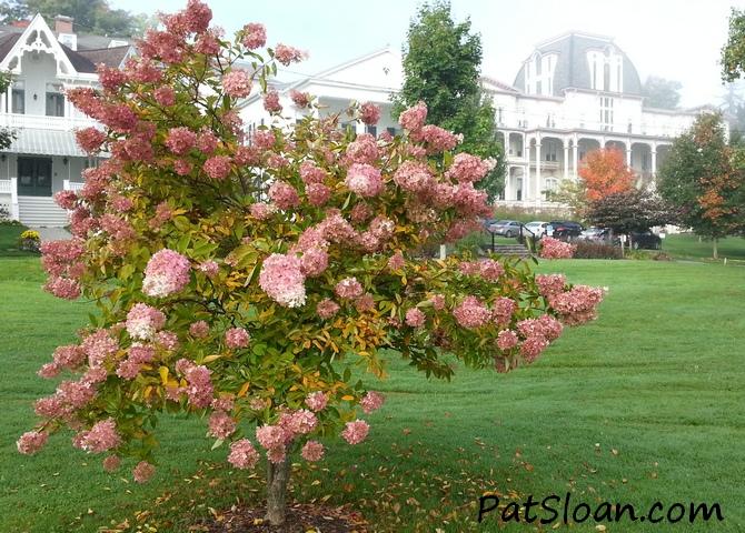 pat sloan flowers 2