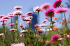 Flowers and a Skyline (sorta)