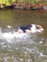 Troy splashing around