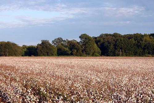 louisiana farming cotton agriculture