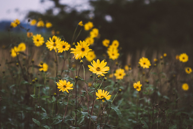 [186] Sunny Flowers