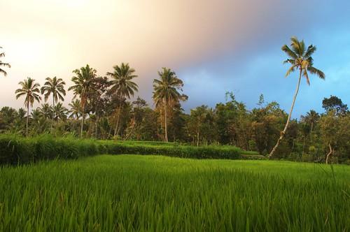 asie vue lombok indonesie riziere tetebatu