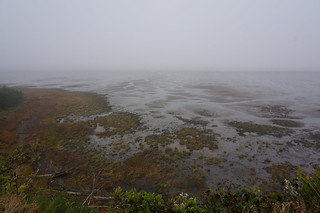 Willapa Bay mud flats
