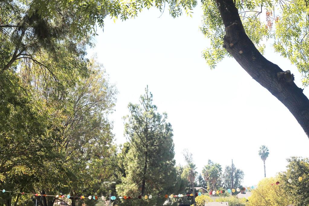 serene's woodsy onederland