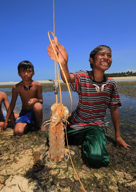 Catching Mantis Shrimps