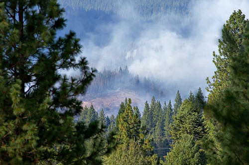 california county tree pine forest canon fire is do king el sugar burning burn pines 7d forestfire pollock ponderosa f4 digger dorado conifer 400mm