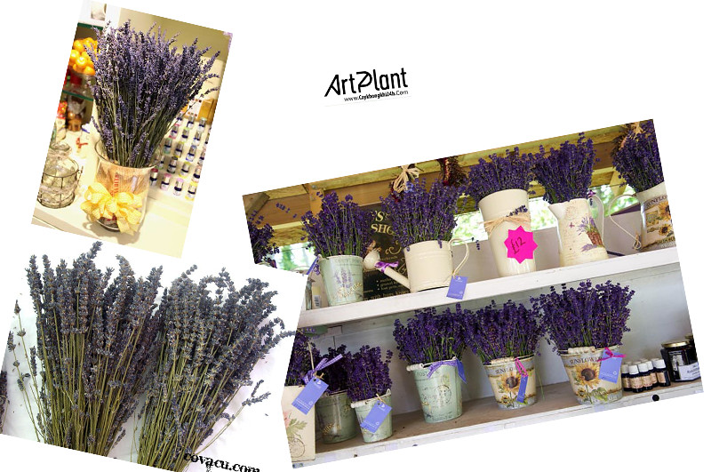 caykhongkhi24h.com | art plant | cay khong khi | tieu canh khong khi | terrarium | phu lieu
